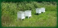 Rent A Hive